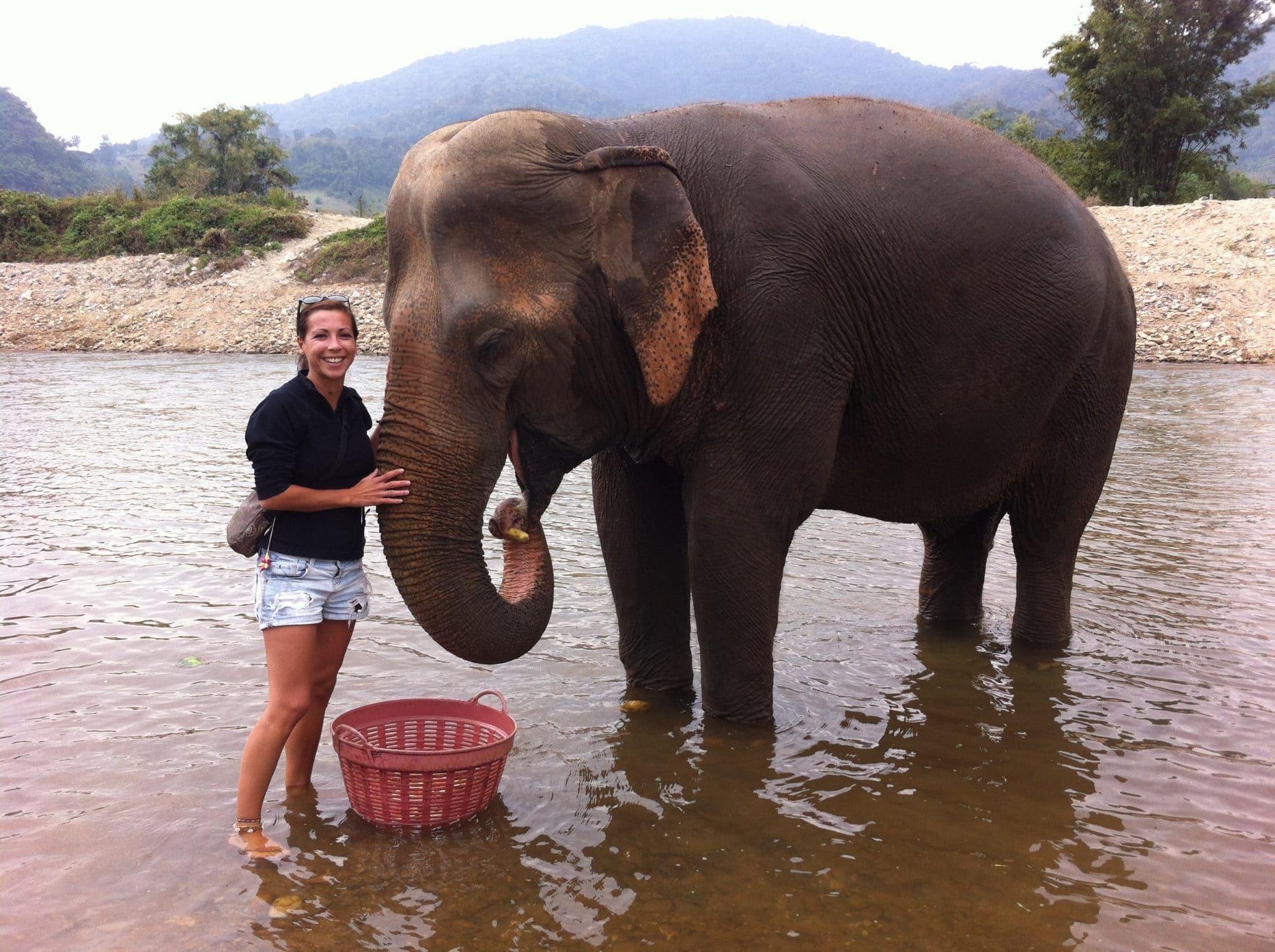 elephant thailande