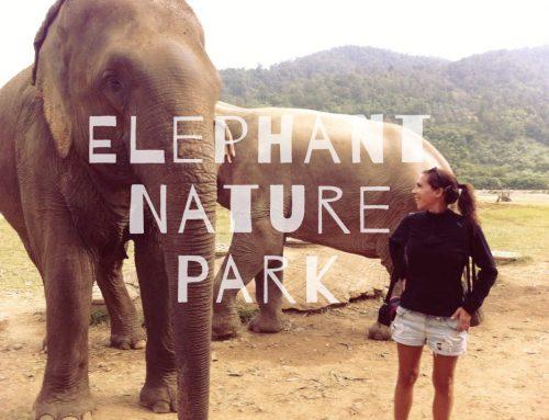 Voir les éléphants autrement en Thaïlande