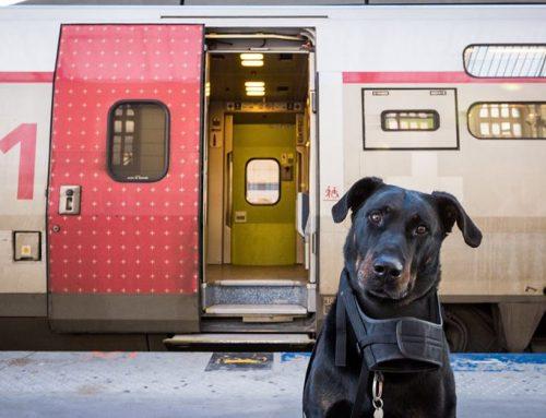 Voyager avec son chien en TGV